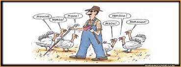 Thanksgiving Turkey Meme - funny thanksgiving pictures for facebook turkey time and the