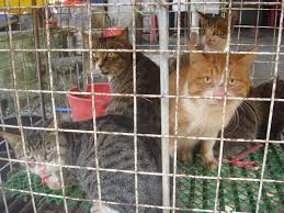 cat meat wikipedia