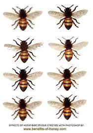 20 wonderful honey bee facts 8 is surprising