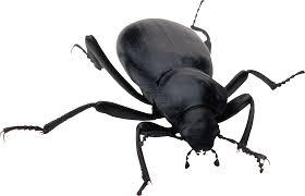 bug bioinformatics r u0026d