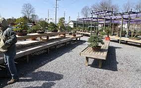 the kennett collection reduction sale u2013 valavanis bonsai blog