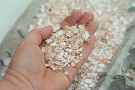 ground eggshells how to encourage your chickens to lay naturally eco