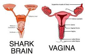we shall now refer periods as