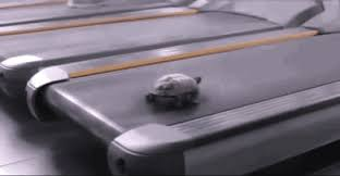 Treadmill Meme - turtle on a treadmill animals know your meme