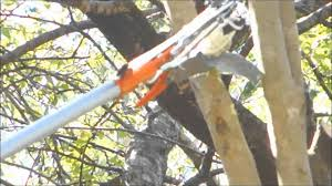 how to cut a tree branch without a ladder for 37 bunnings hortex