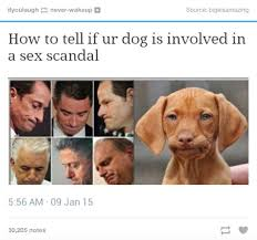Know Your Meme Dog - sex scandal dogs know your meme