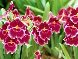 Las flores que nos gustan. Images?q=tbn:ANd9GcQRwyrYFalWDipFTq1Zz4VUF2exJVVCnyIzzBLeDecGM0_NJQ0&t=1&usg=__RBZVYbjjeldlouUiBCUZPDD005A=