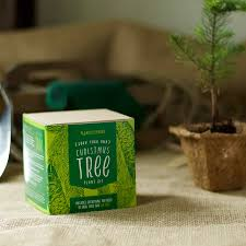 grown your own tree kit by plants from seed