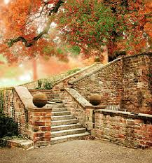 background photography fall tree stair background wedding photography backdrop studio