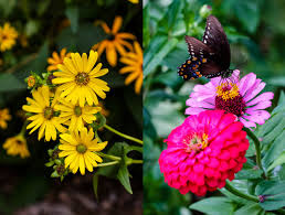 paleo spirit in brooklyn botanic garden fatty u0027cue and oddfellows