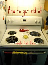 How To Get Rid Of Fruit Flies  Cute DIY Projects - Small flies in kitchen sink