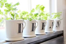 Window Sill Herb Garden Designs Windowsill Herb Garden Transitional Kitchen Apartment Therapy