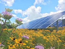 solar power solar power and honey bees make a sweet combo in minnesota