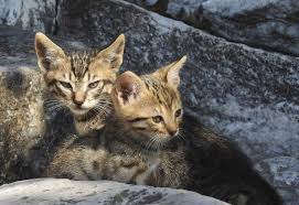 cats are killing everything in australia and nobody knows what to