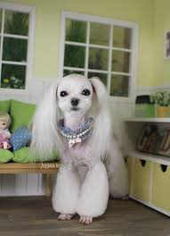 joypia yorkshire haircuts dog s life grooming are a professional and friendly dog grooming