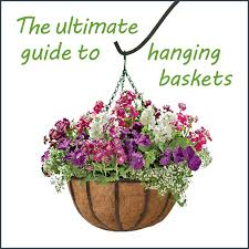 hanging flowers the ultimate guide to hanging baskets