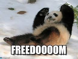 Panda Meme - freedoooom panda meme on memegen