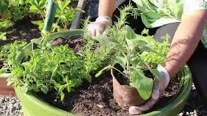herb gardening for beginners home design