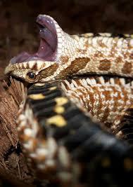 Blind Snake For Sale 451 Best No Legssss U003c3 Images On Pinterest Reptiles Amphibians