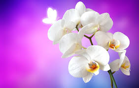 free photo orchid butterfly flower white free image on