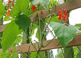 Vertical Garden Trellis - how to start vertical gardening hobby farms