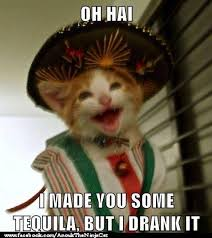 Funny Tequila Memes - too much tequila meme much best of the funny meme