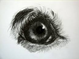 17 best dogs eyes images on pinterest dog drawings draw and dog art