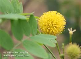 Yellow Pom Pom Flowers - cheers for floral pom poms great stems