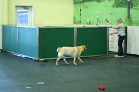 dog day care equipment room dividers direct animal