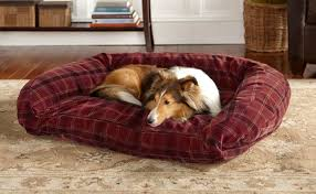 tough dog beds 7 indestructible dog beds for chew tastic dogs rover com