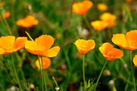 free images nature field meadow prairie flower petal