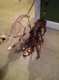 Halloween Skeleton Dog Decoration by Mummy Cat Halloween Prop Halloween Pinterest Cat Halloween