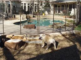 temporary dog fences contra costa county ca