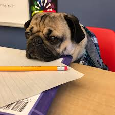 doug the pug on waiting to get out of class before