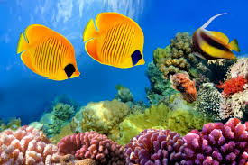 online buy wholesale ocean coral from china ocean coral