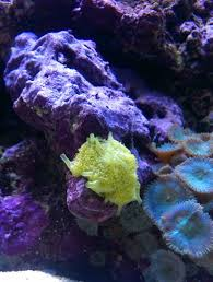 Live Rock Aquascaping Ideas Rock Florida Reef Rock 50lbs Free Shipping Reef Cleaners