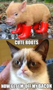Cat Facts Meme - all about tuxedo cat facts personality grumpy cat cat and memes