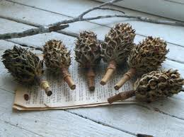 magnolia tree bulbs seed pods for crafting christmas