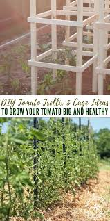 Tomatoes Trellis 32 Free Diy Tomato Trellis U0026 Cage Ideas To Grow Your Tomato Big