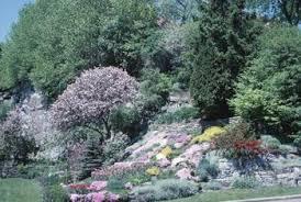 low maintenance shrubs and hillside landscaping ideas home