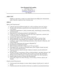 Information Technology Resume Objective Great Sales Objectives Resume Missed Homework Sheet Academic