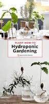 the no soil zero maintenance method for growing houseplants