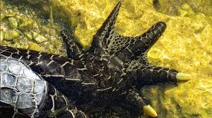 alligator claws alligator claw regenaxe