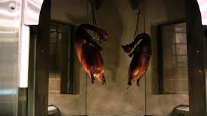 Duck Decorations Home Cooking Duck In A Wood Stone Duck Oven Hd Youtube