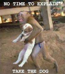 No Time To Explain Meme - no time to explain puppy with monkey jpg