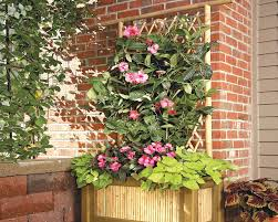 build a bamboo planter with a trellis australian handyman magazine