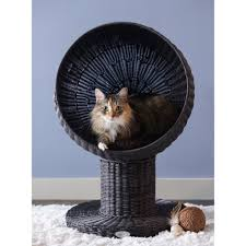 cat beds heated luxury u0026 outdoor cat beds petco