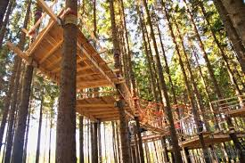 building your own tree house how to build a house tree climbing and tree house building training in czech republic
