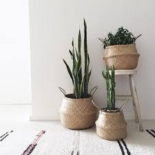 Ikea Plant Ideas by Best 25 Plant Basket Ideas On Pinterest Fiddle Leaf Fig Tree