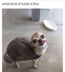 Turtle Meme - what kind of turtle is this dogs know your meme